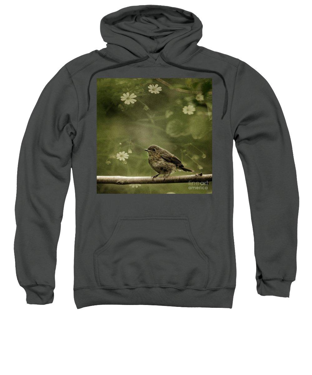 Robin Sweatshirt featuring the photograph The Little Robin by Angel Tarantella