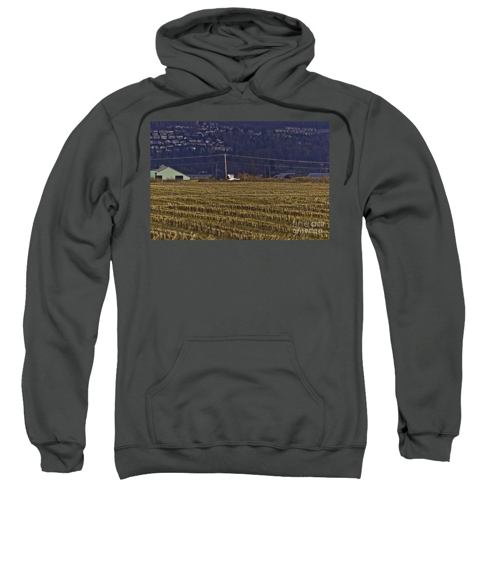 Art Sweatshirt featuring the photograph The Loner by Clayton Bruster