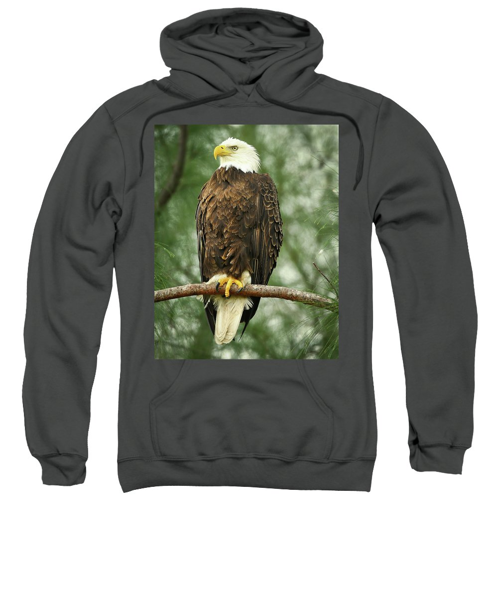 Bald Eagle Sweatshirt featuring the photograph The Majestic by Dennis Goodman