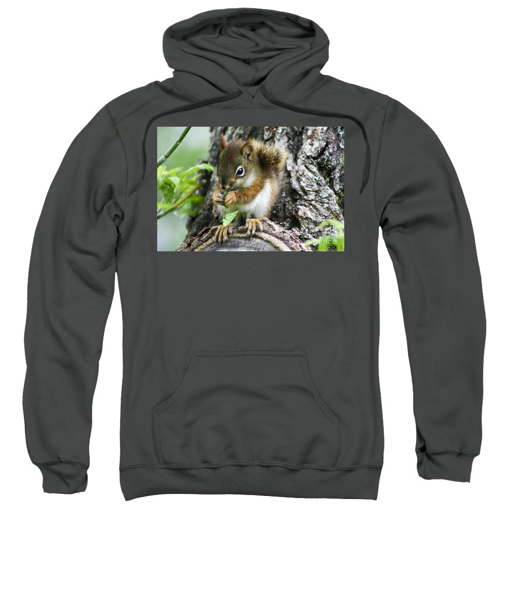 Animal Sweatshirt featuring the photograph The Most Adorable Baby Squirrel by Teresa Zieba