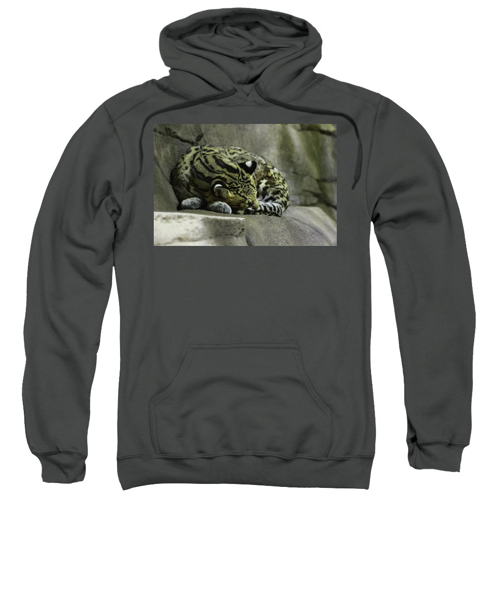 Cat Sweatshirt featuring the photograph The Napping Rock by Laddie Halupa