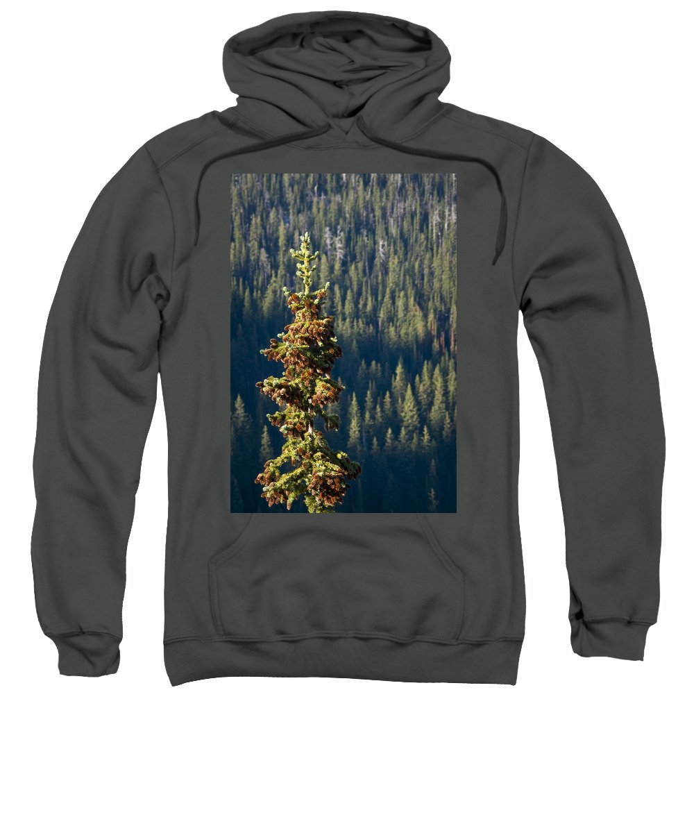 Trees Sweatshirt featuring the photograph The Next Generation by Albert Seger