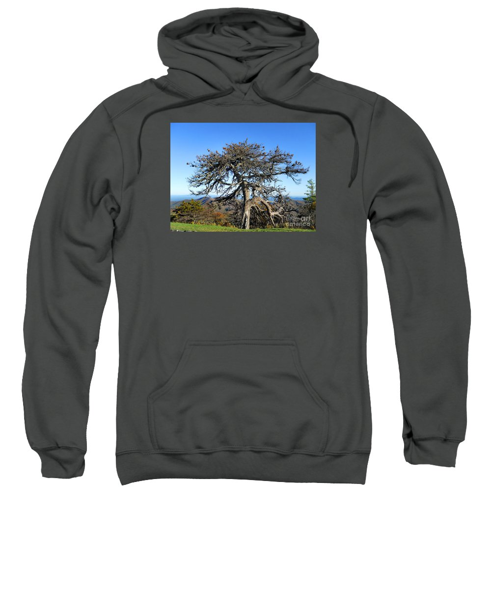 Scenic Tours Sweatshirt featuring the photograph The Original Knarled by Skip Willits
