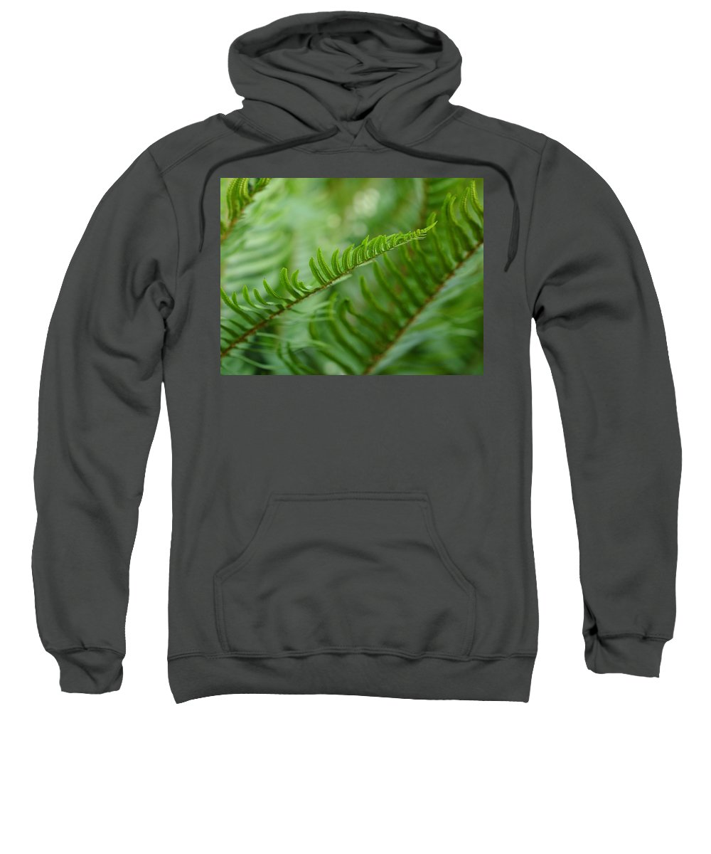 Sword Ferns Sweatshirt featuring the photograph The Quiet Beauty Of Ferns by I'ina Van Lawick