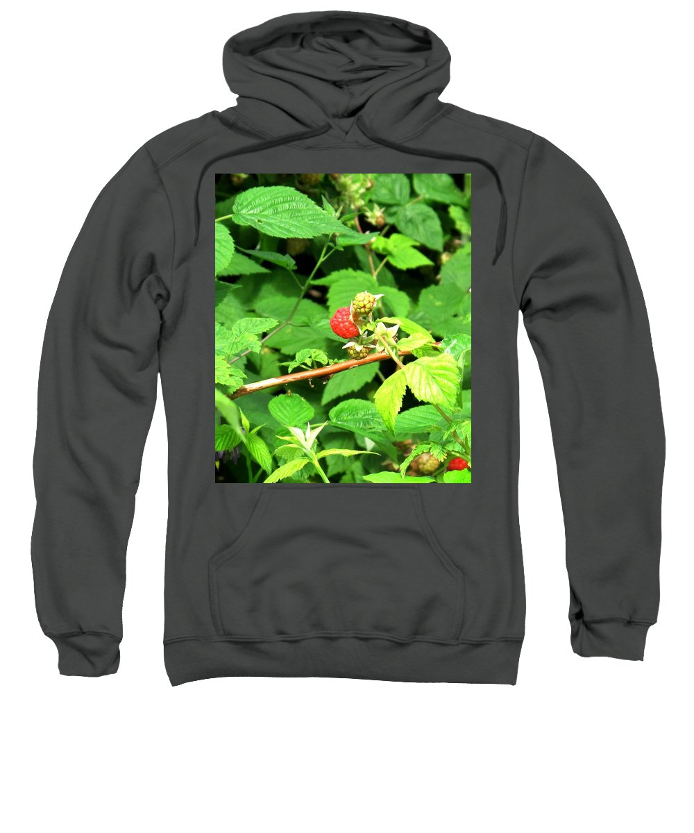Rasberry Sweatshirt featuring the photograph The Rasberry Patch by Ian MacDonald