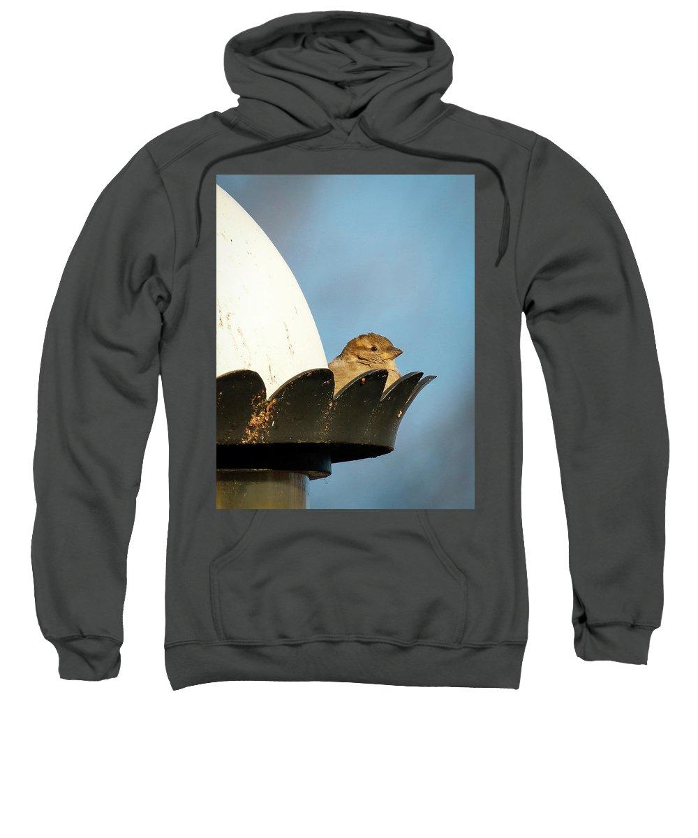 Bird Sweatshirt featuring the photograph The Sentry by Richard Xuereb