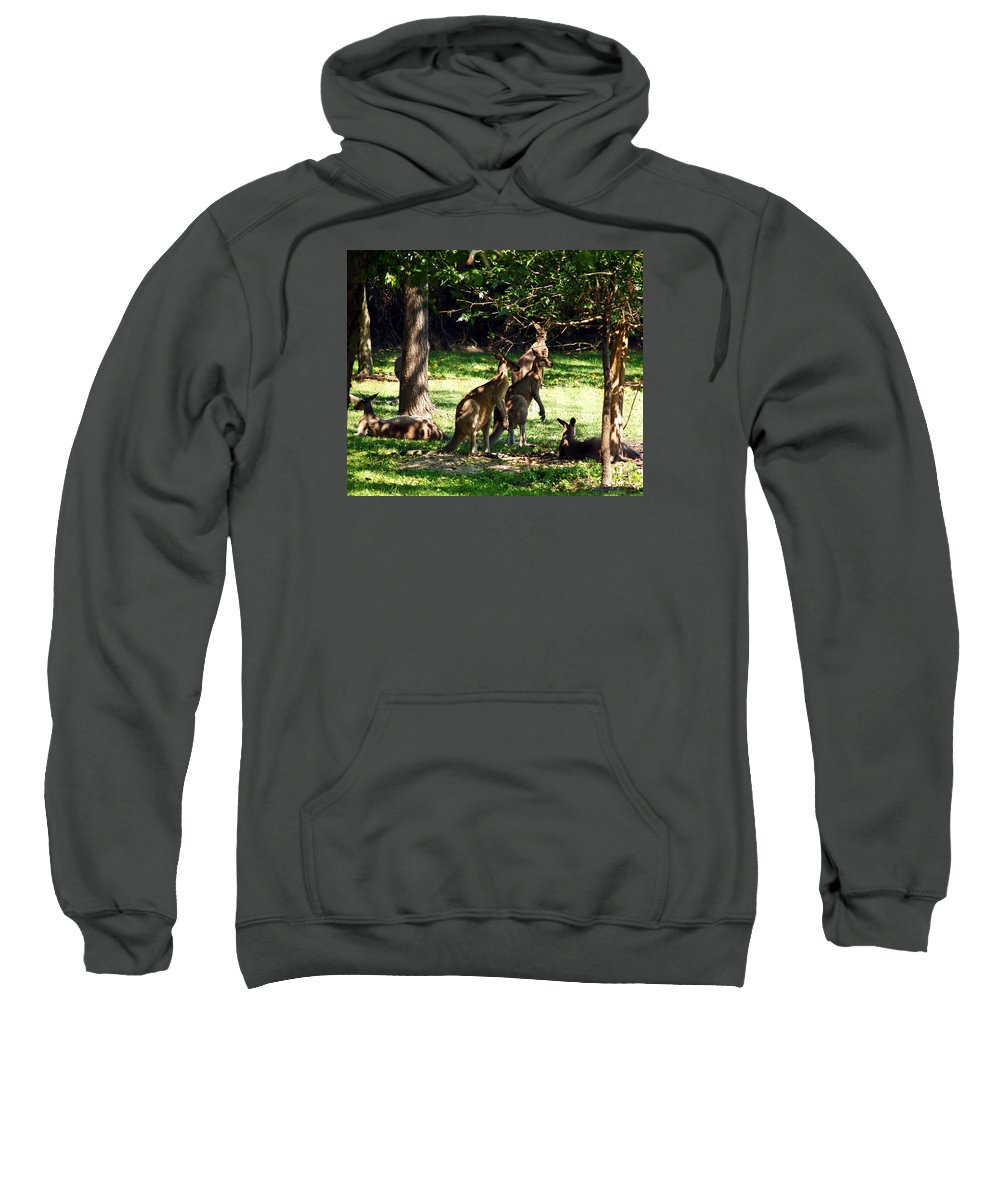 Fine Art Photography Sweatshirt featuring the photograph The Three Musketeers by Patricia Griffin Brett