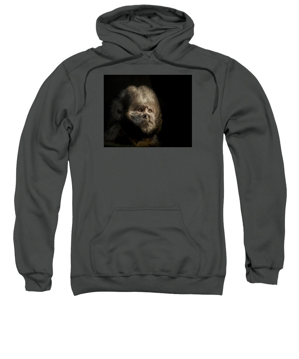 Capuchin Monkey Hooded Sweatshirts T-Shirts