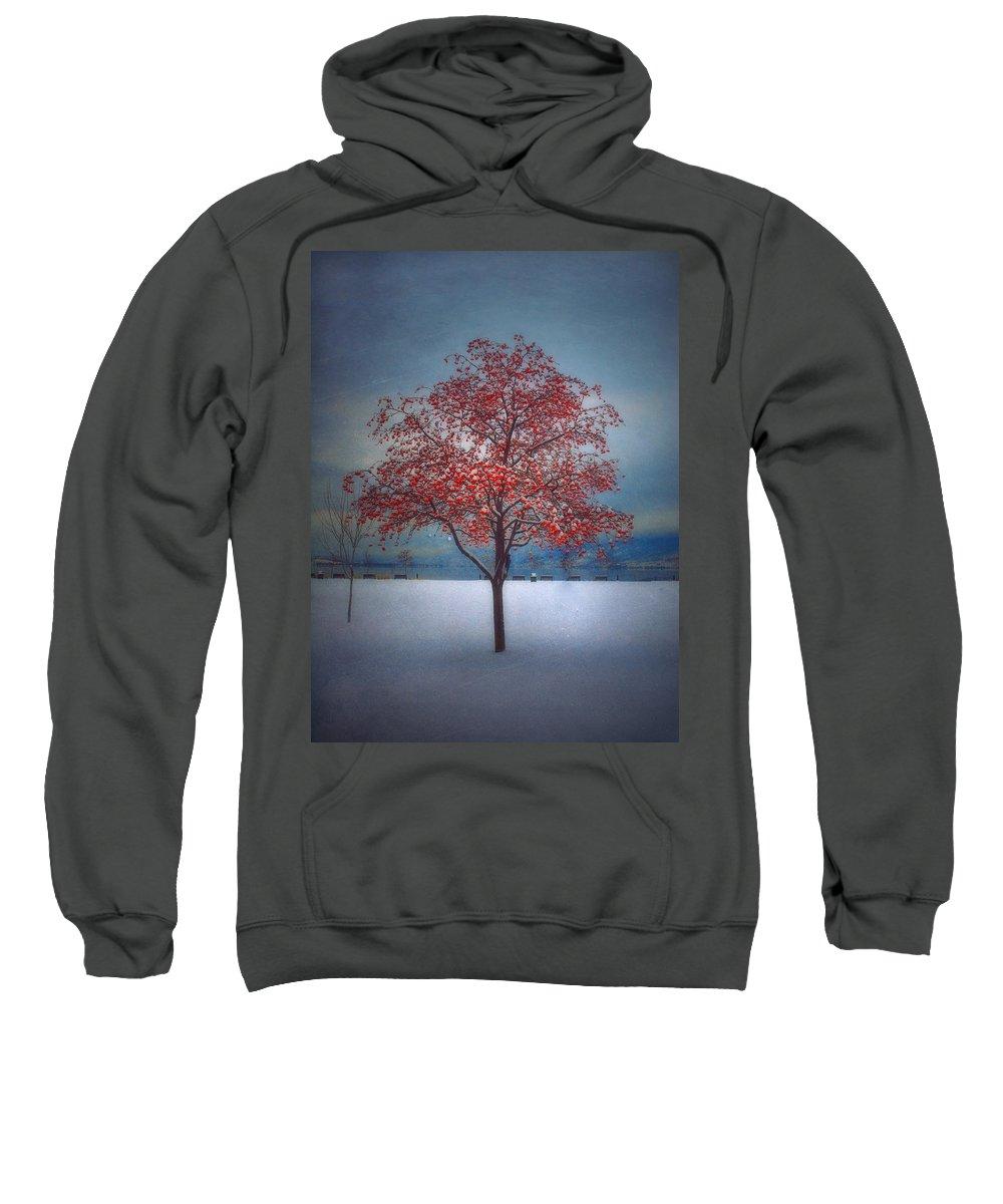 Tree Sweatshirt featuring the photograph The Winter Berries by Tara Turner