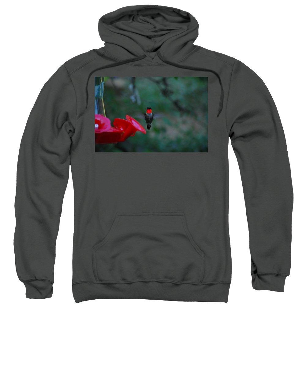 Hummingbird Sweatshirt featuring the photograph They Call Me Ruby by Lori Tambakis