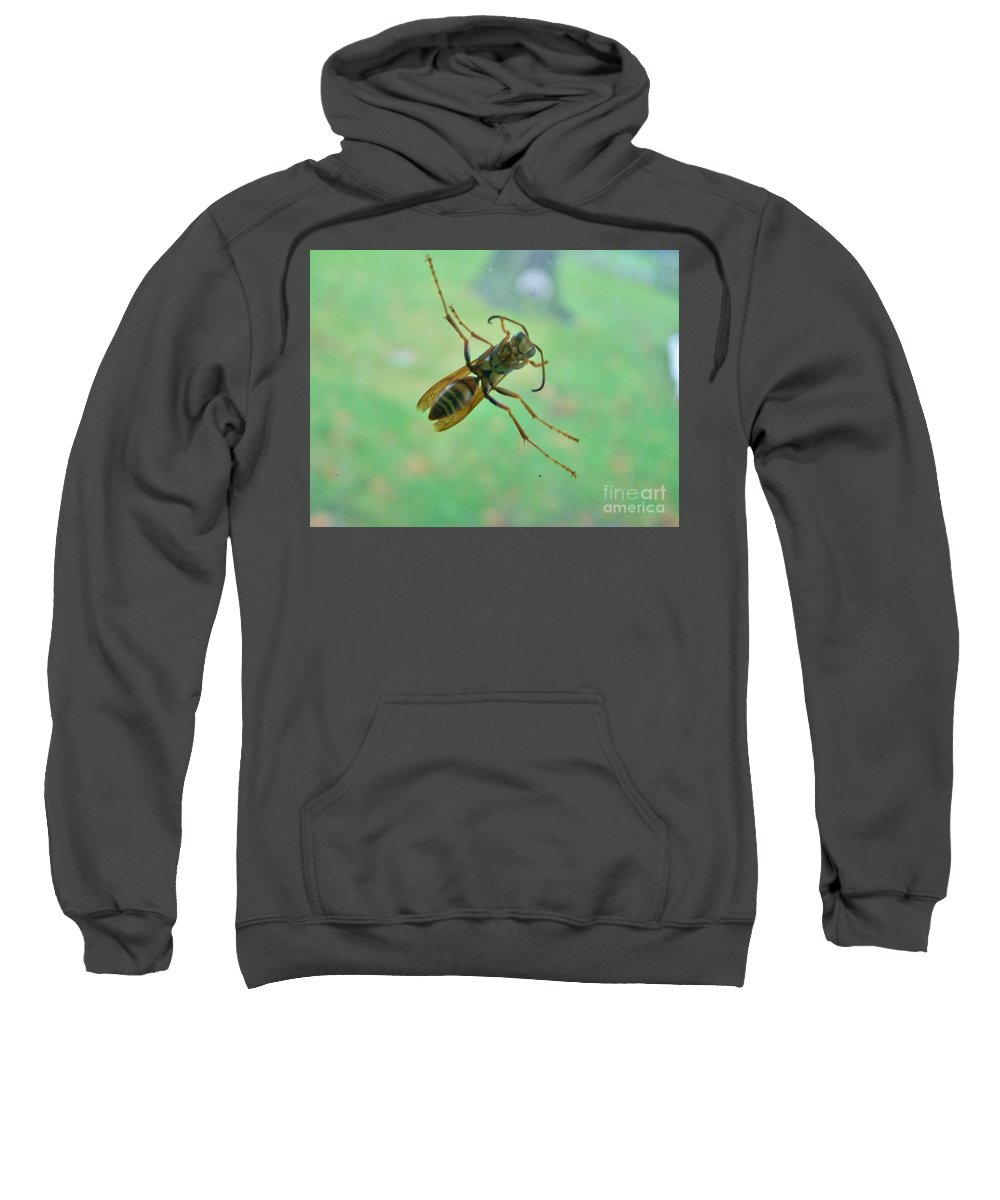 Insect Sweatshirt featuring the photograph Thin Waisted Wasp On Door Glass   October Indiana by Rory Cubel