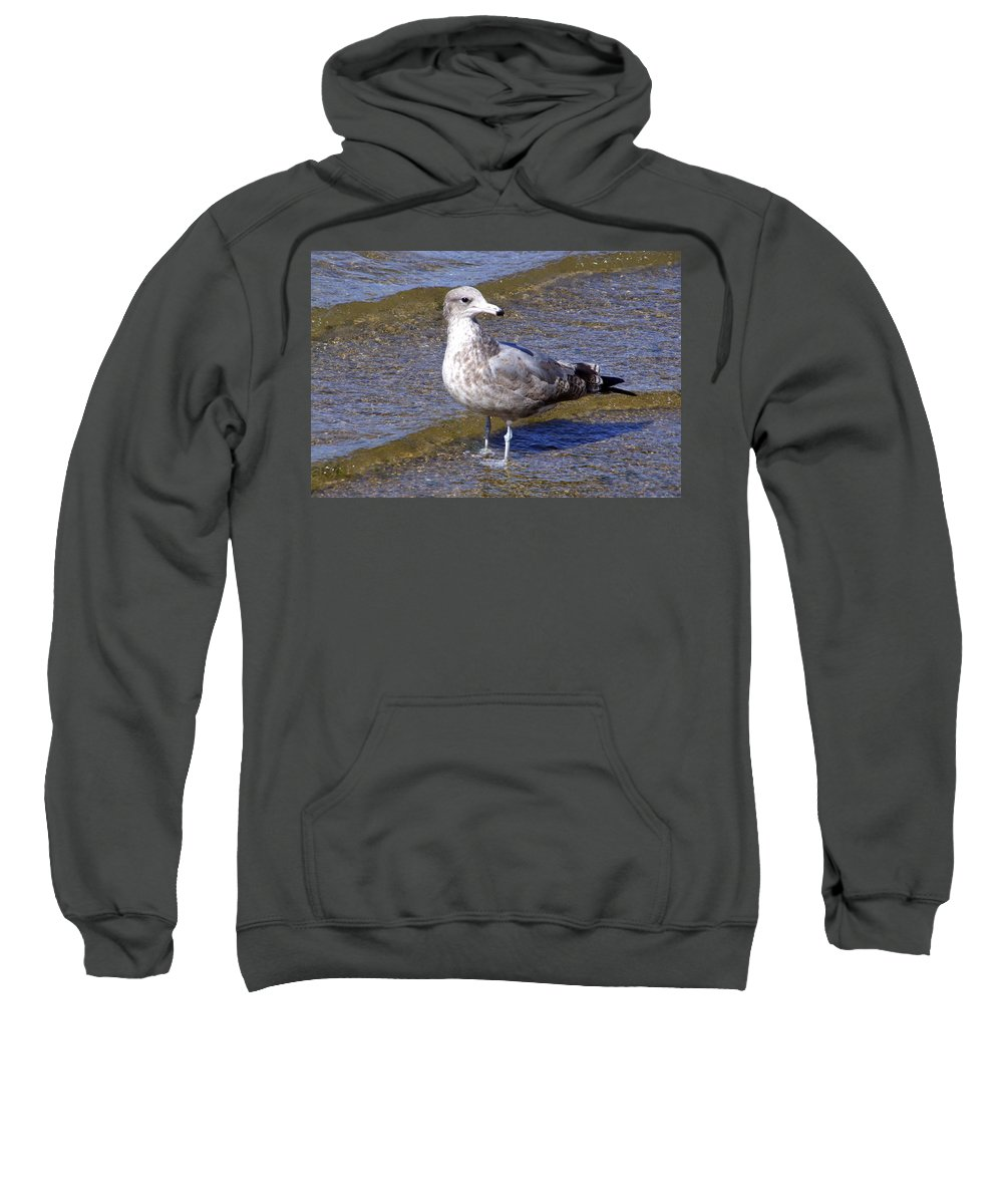 Gull Sweatshirt featuring the photograph This Is My Good Side by Mary Deal