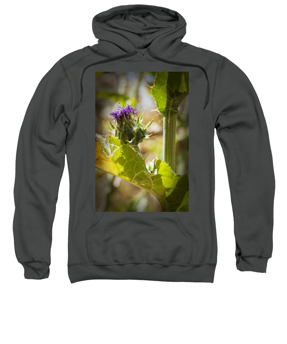 Thistle Sweatshirt featuring the photograph Thistle 2 by Kelley King