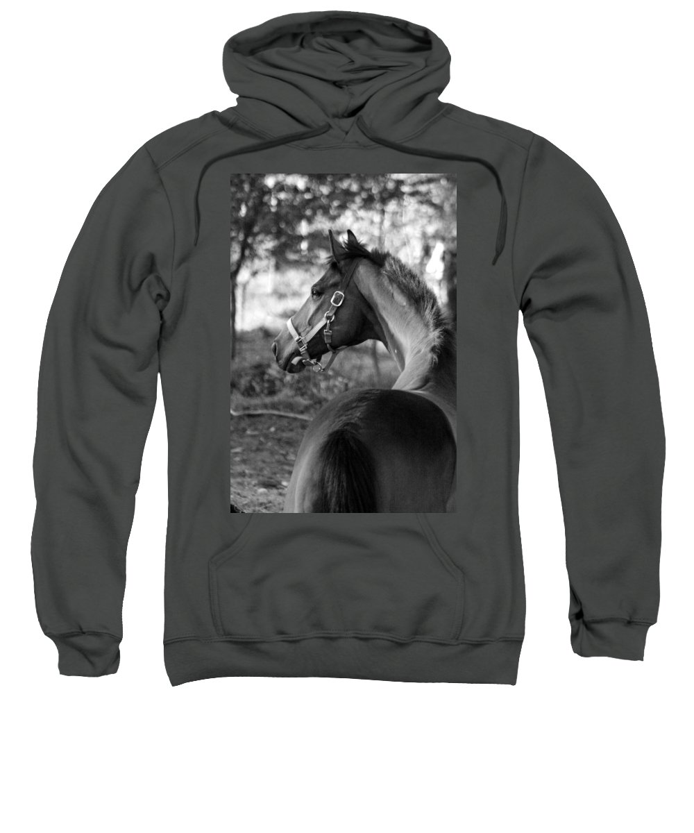 Thoroughbred Sweatshirt featuring the photograph Thoroughbred - Black And White by Angela Rath