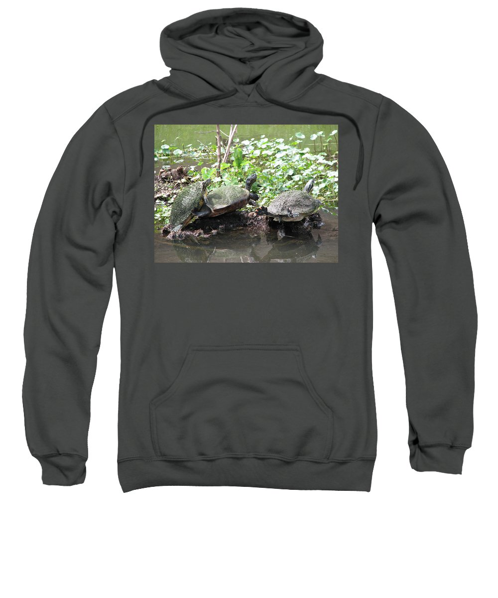 Turtle Sweatshirt featuring the photograph Three Amigos by Stacey May