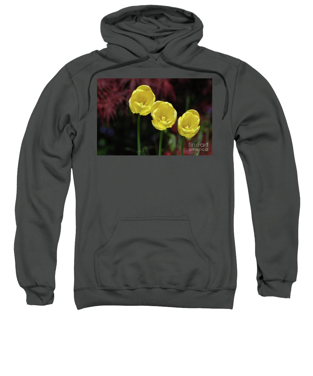 Tulip Sweatshirt featuring the photograph Three Blooming Yellow Tulips Of Different Heights by DejaVu Designs