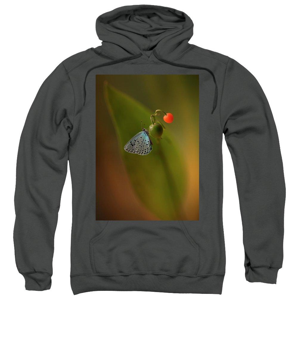 Macro Sweatshirt featuring the photograph Three Colours by Jaroslaw Blaminsky