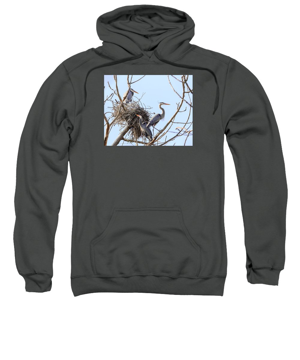 Blue Heron Sweatshirt featuring the photograph Three Herons by Joni Eskridge