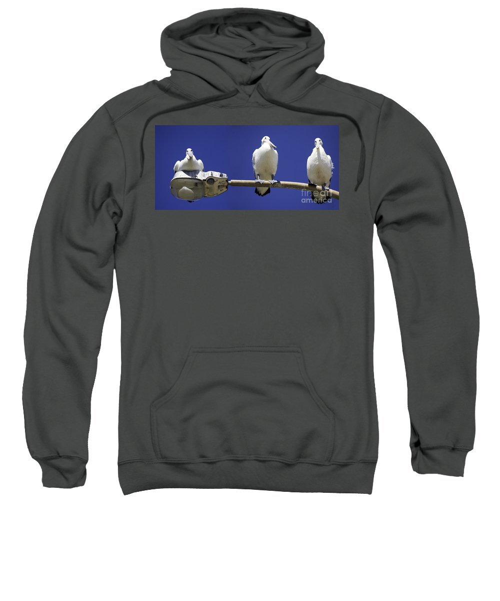 Australian White Pelicans Sweatshirt featuring the photograph Three pelicans on a lamp post by Sheila Smart Fine Art Photography