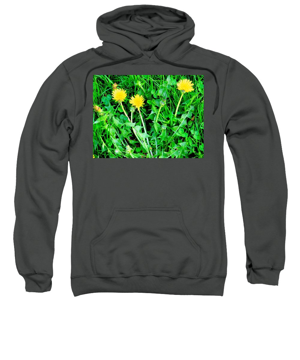 Dandylions Sweatshirt featuring the photograph Three Tenders by Ian MacDonald