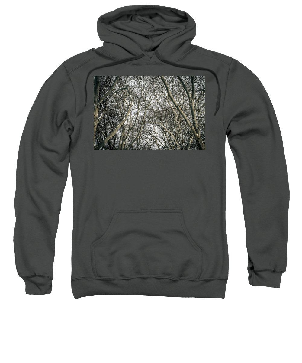 Trees Sweatshirt featuring the photograph Through The Trees by Ray Sheley