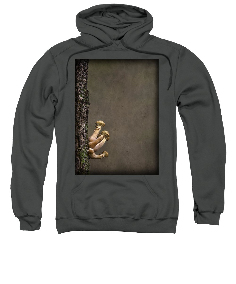 Fungi Sweatshirt featuring the photograph Ties That Bind by Evelina Kremsdorf