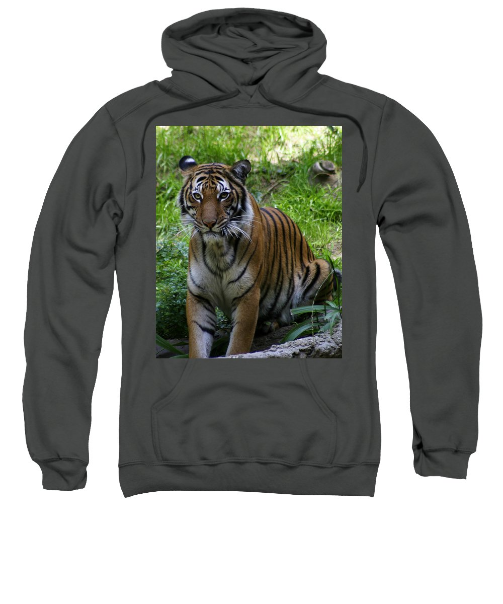 Zoo Sweatshirt featuring the photograph Tiger by Anthony Jones