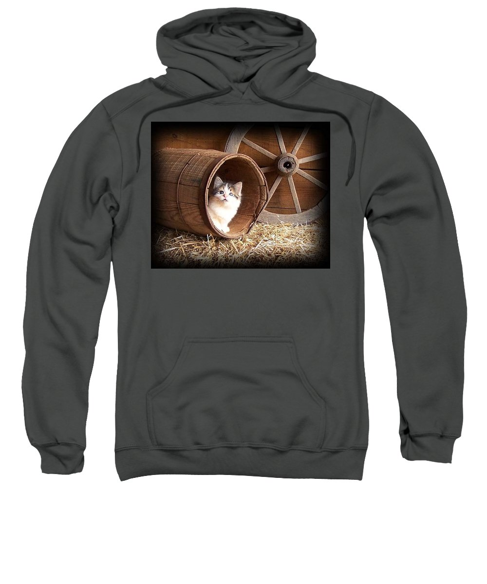 Kitten Sweatshirt featuring the photograph Tiki In The Old Barrel by Sue Martin