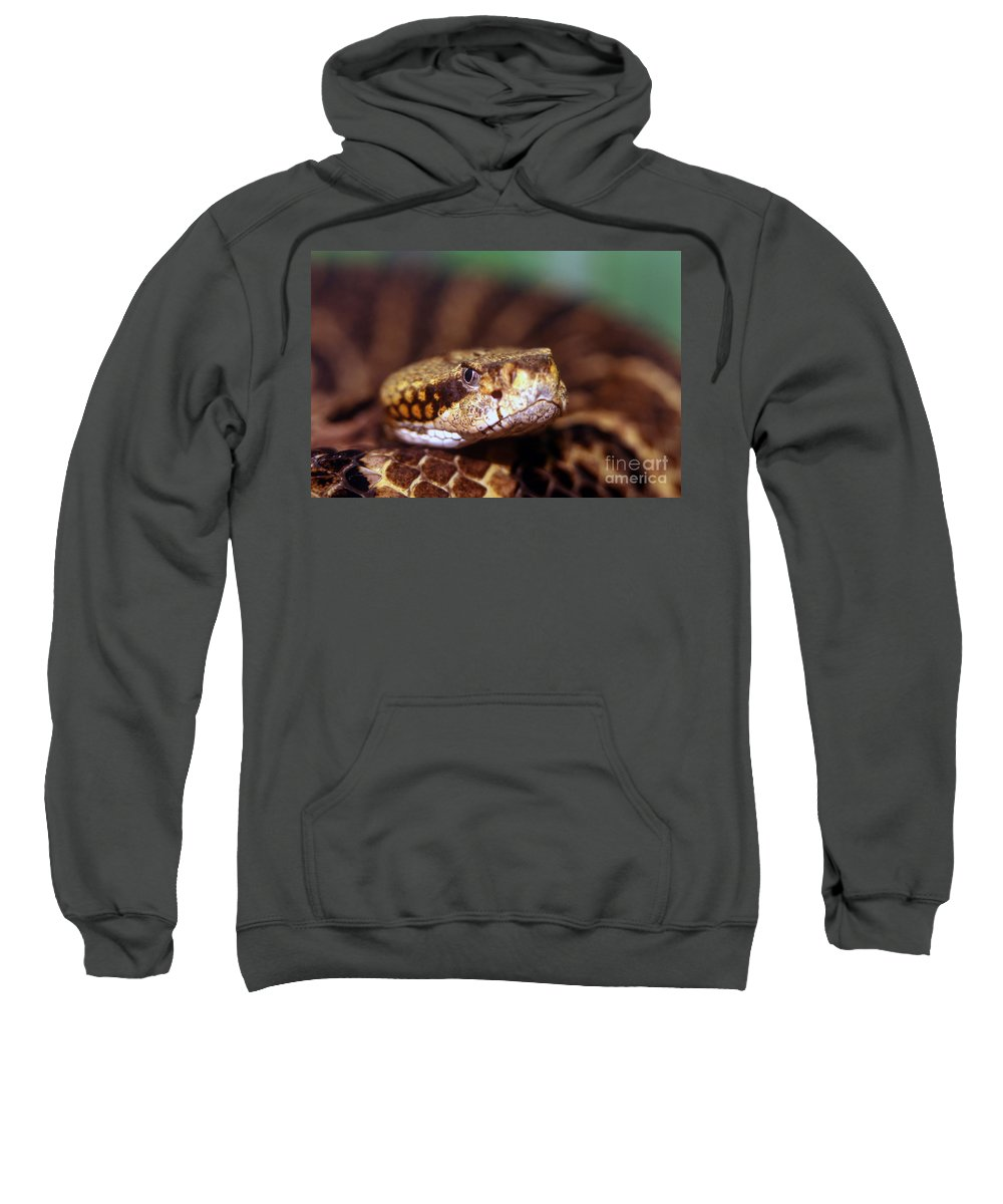 Animal Sweatshirt featuring the photograph Timber Rattler Coil by Alan Look