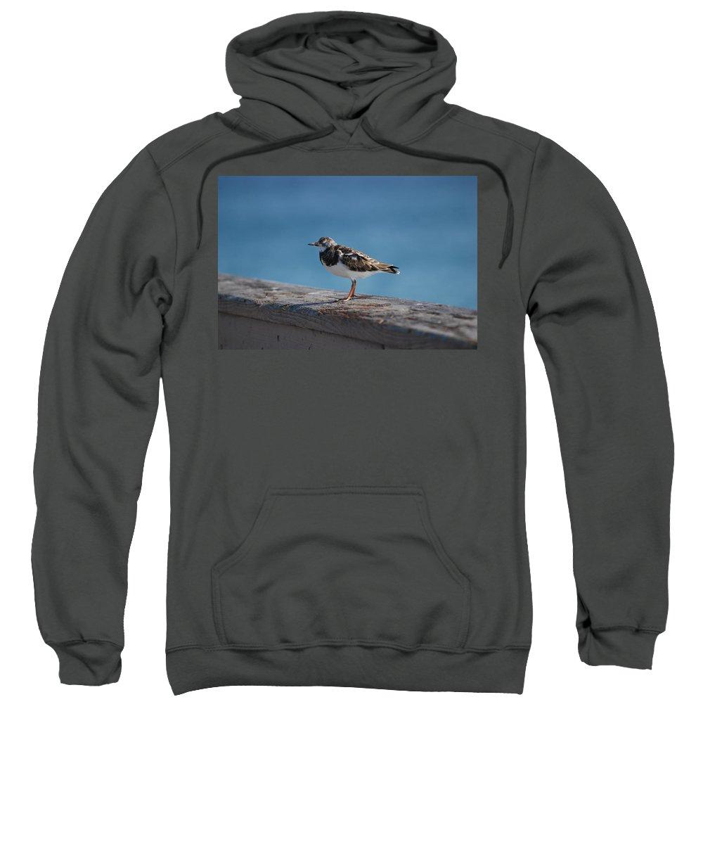 Bird Sweatshirt featuring the photograph Tippi Hedren by Rob Hans