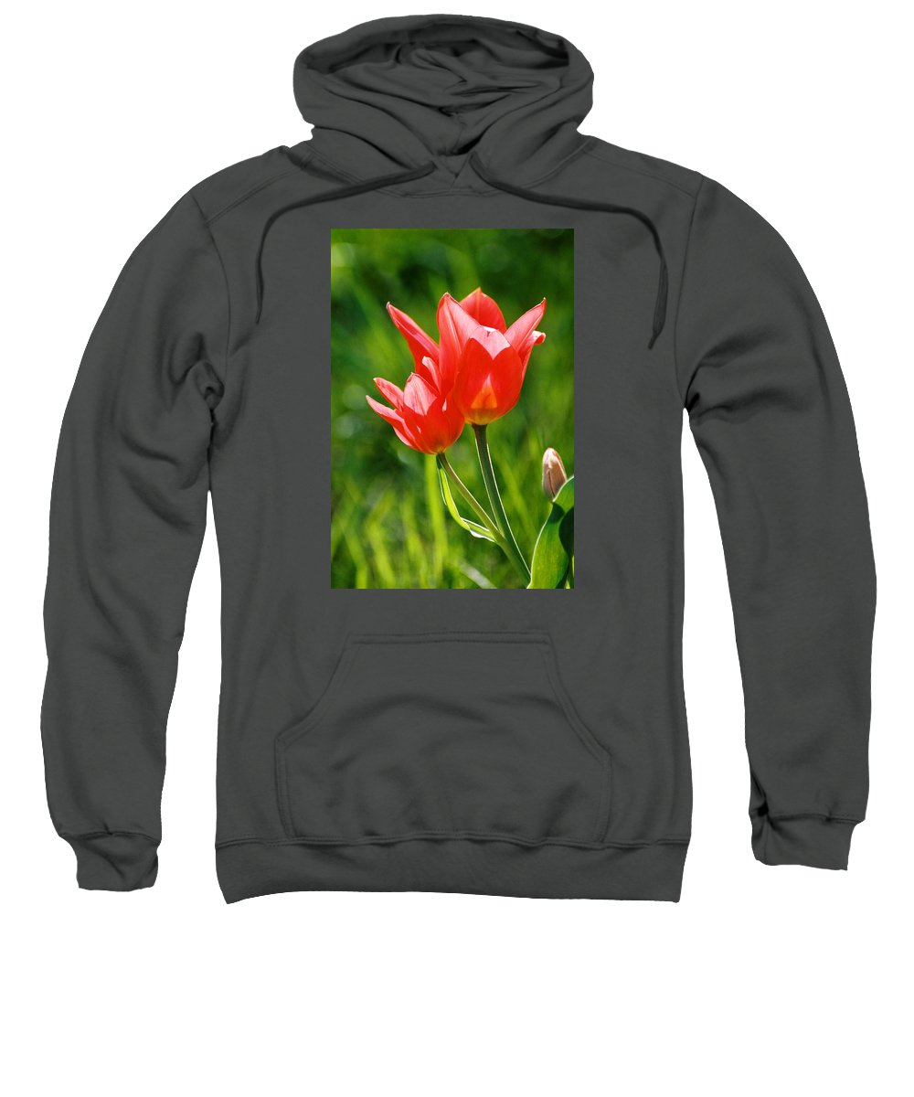 Flowers Sweatshirt featuring the photograph Toronto Tulip by Steve Karol