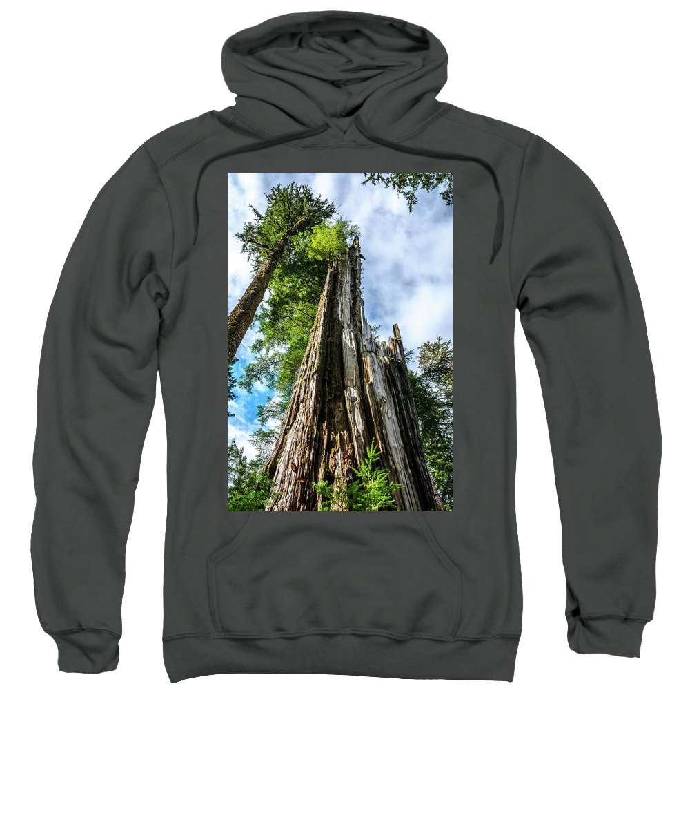 Landscapes Sweatshirt featuring the photograph Towering Trees by Julie Craig