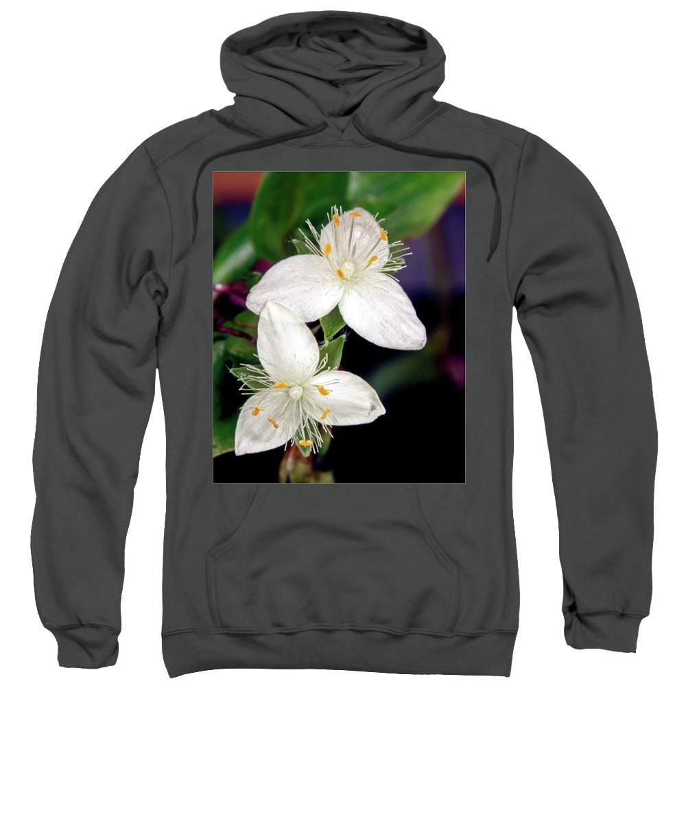 Commelinaceae Sweatshirt featuring the photograph Tradescantia Flower by Jarmo Honkanen