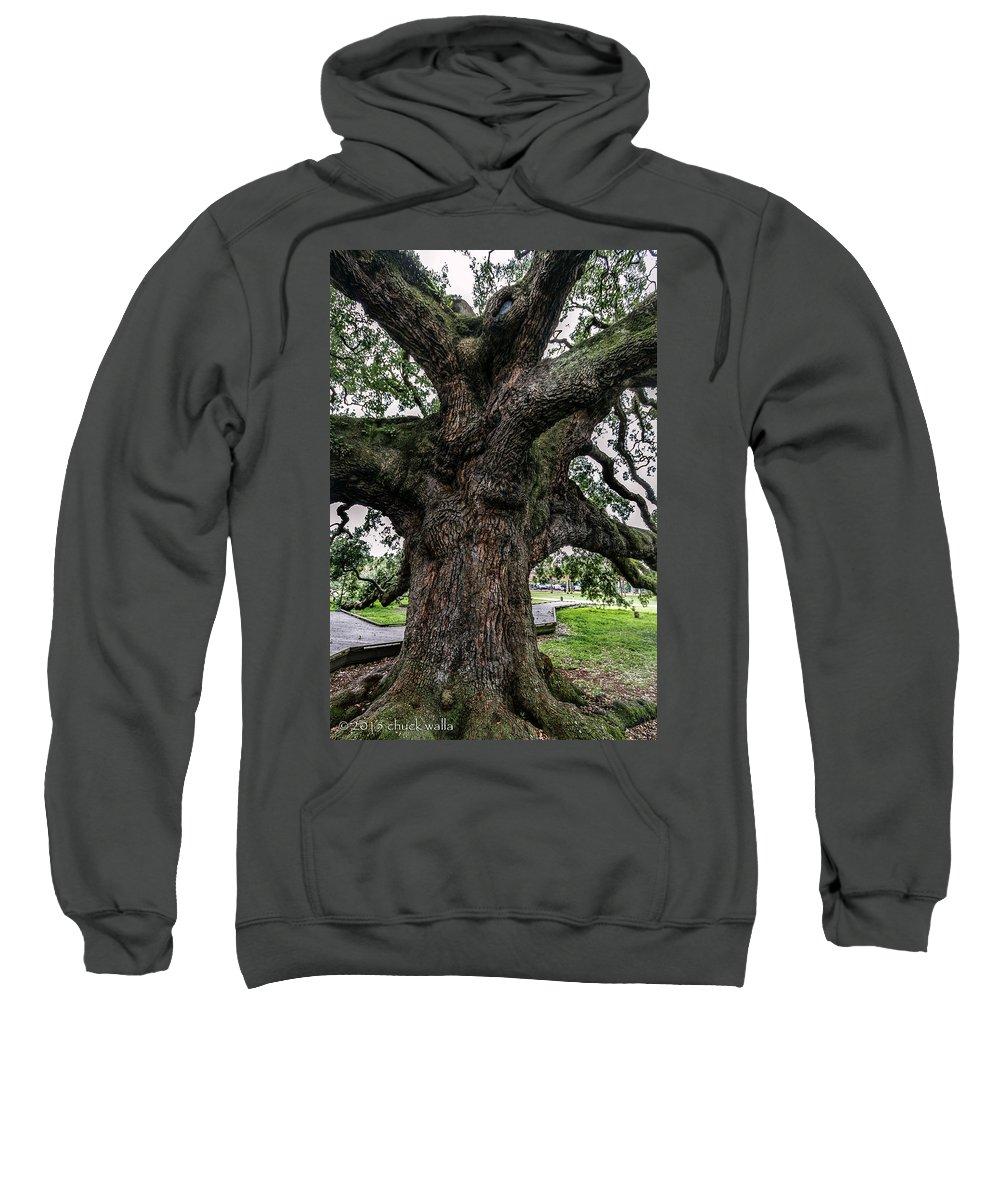 Jacksonville Florida Sweatshirt featuring the photograph Treaty Oak 12 14 2015 024 by Chuck Walla