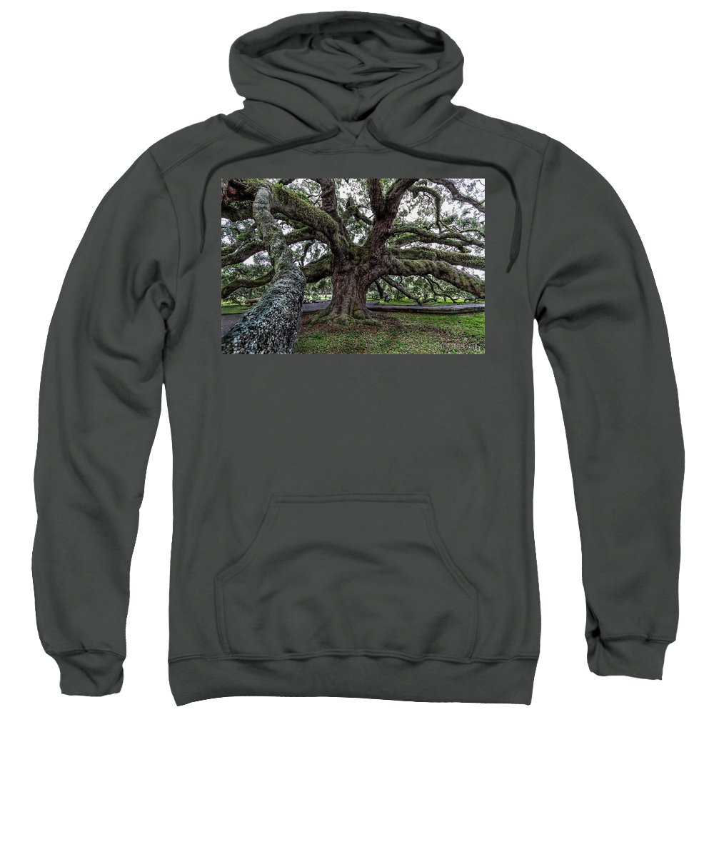 Jacksonville Florida Sweatshirt featuring the photograph Treaty Oak 12 14 2015 027 by Chuck Walla