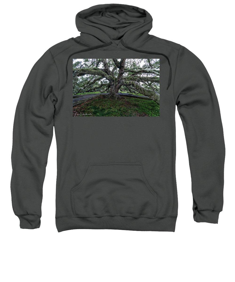 Jacksonville Florida Sweatshirt featuring the photograph Treaty Oak 12 14 2015 028 by Chuck Walla