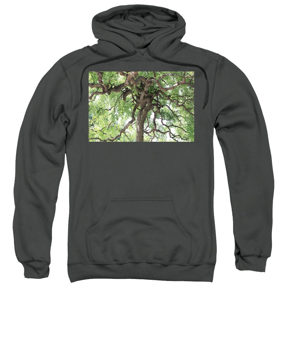 Tree Sweatshirt featuring the photograph Tree At Ming Tombs by Carol Groenen