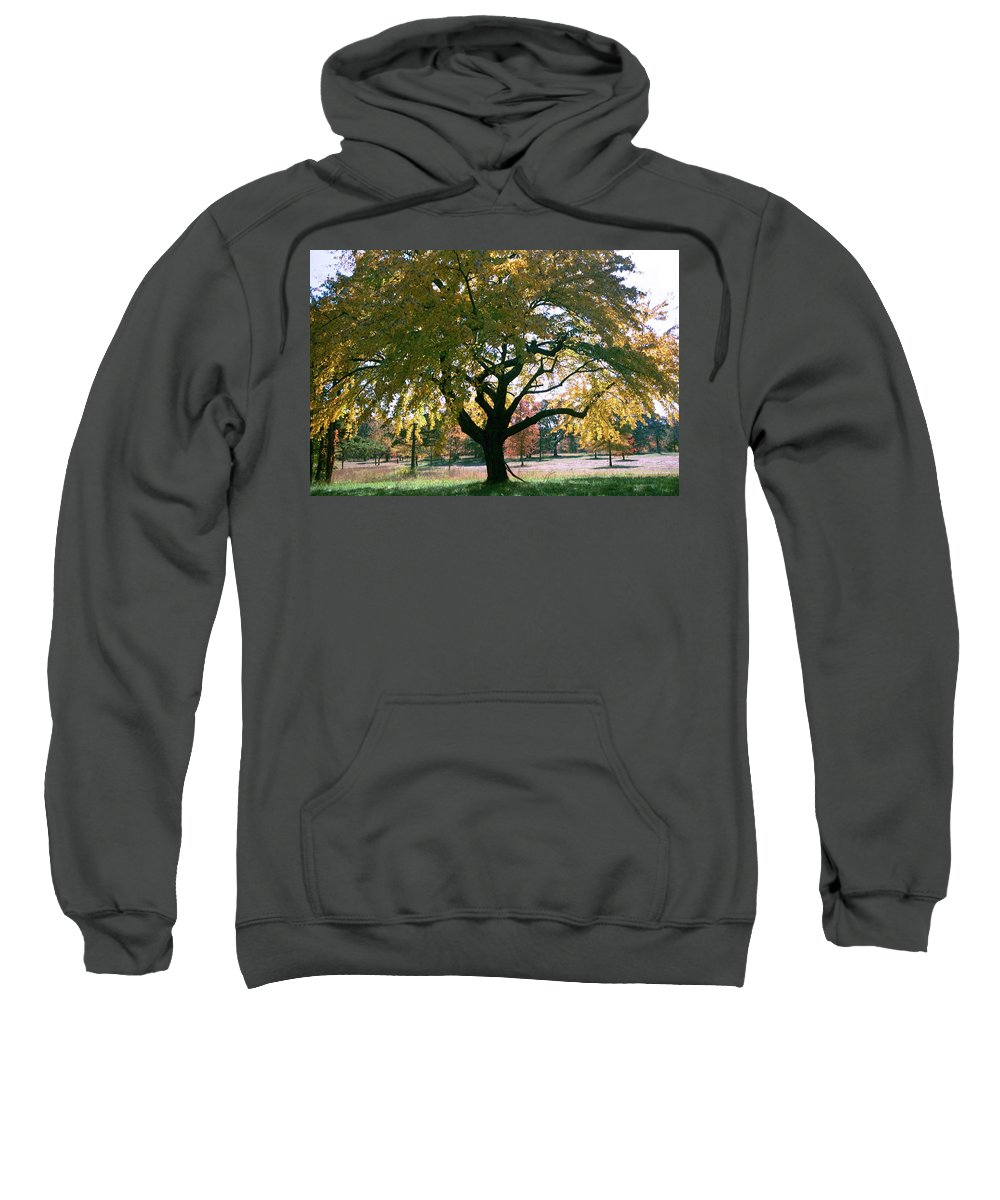 Tree Sweatshirt featuring the photograph Tree by Flavia Westerwelle