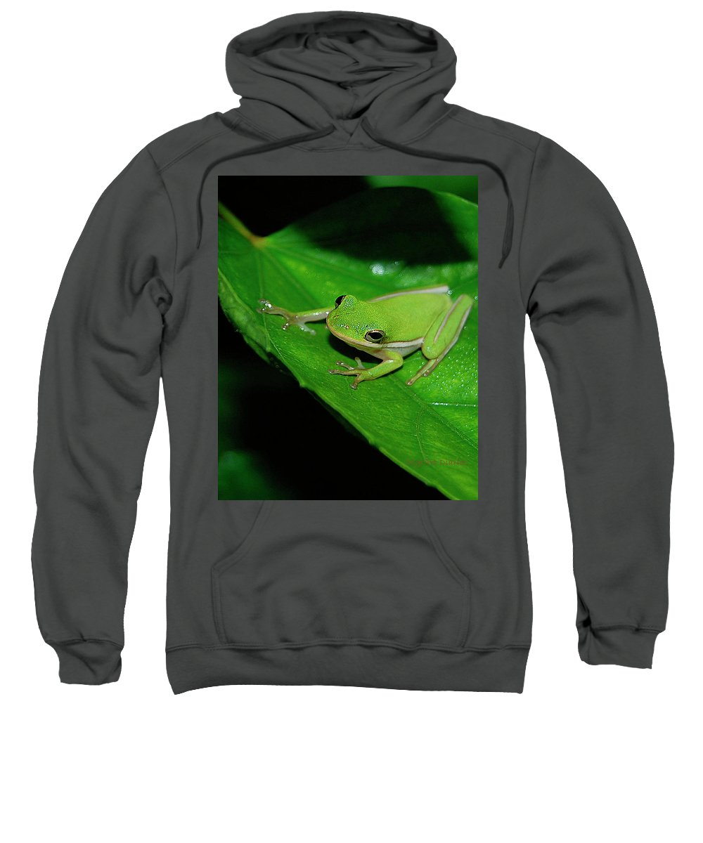 Frog Sweatshirt featuring the digital art Tree Frog On Hibiscus Leaf by DigiArt Diaries by Vicky B Fuller