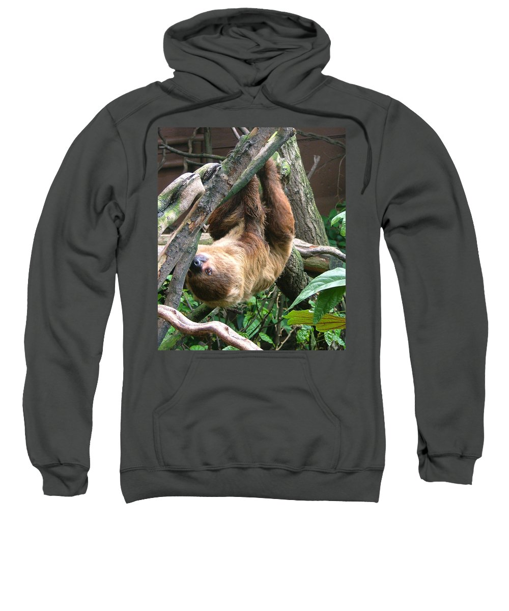 Photograph Sweatshirt featuring the photograph Tree Sloth by Heather Lennox