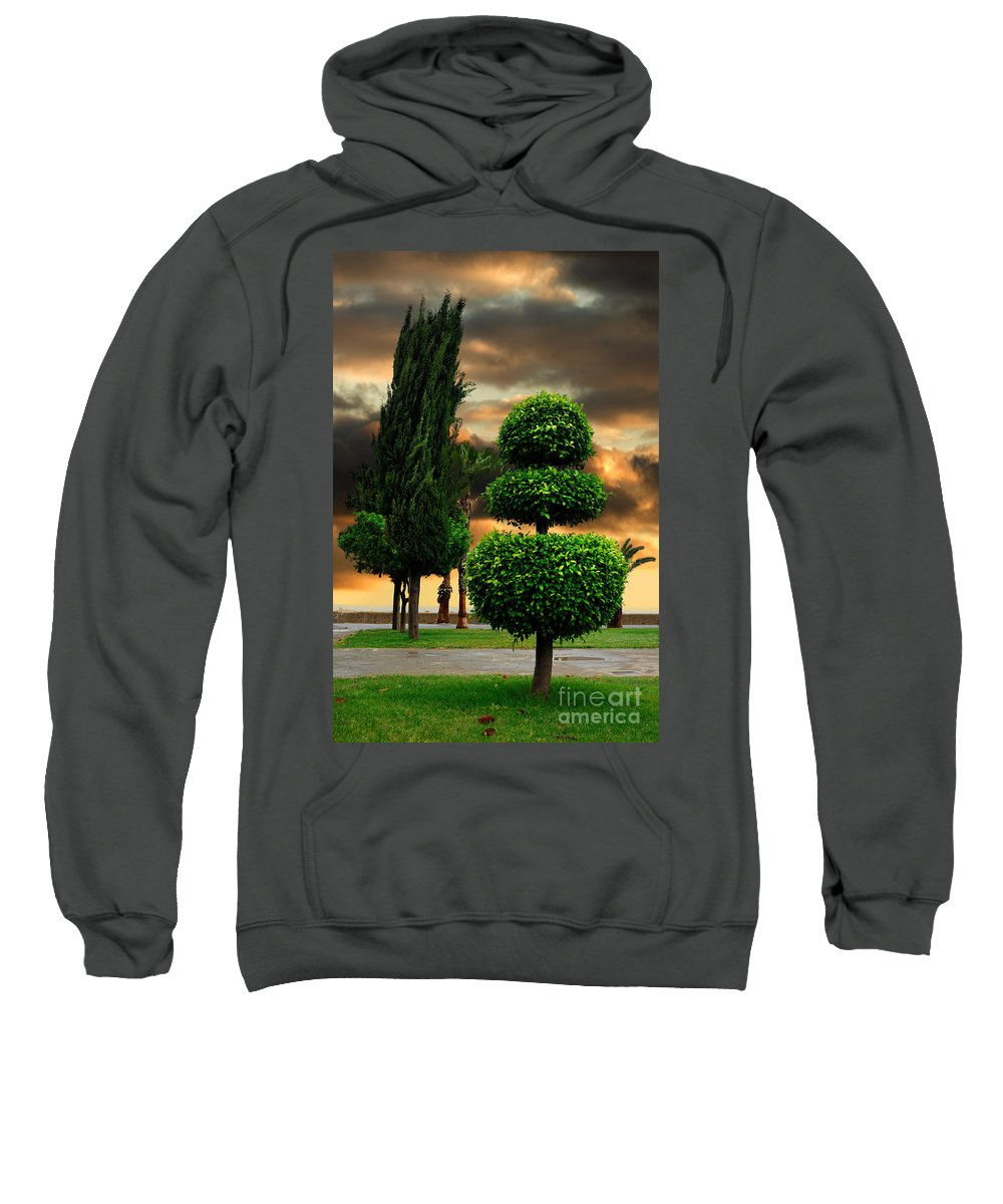 Trees Sweatshirt featuring the photograph Trees In A Park Of Limassol City Sea Front In Cyprus by Oleksiy Maksymenko