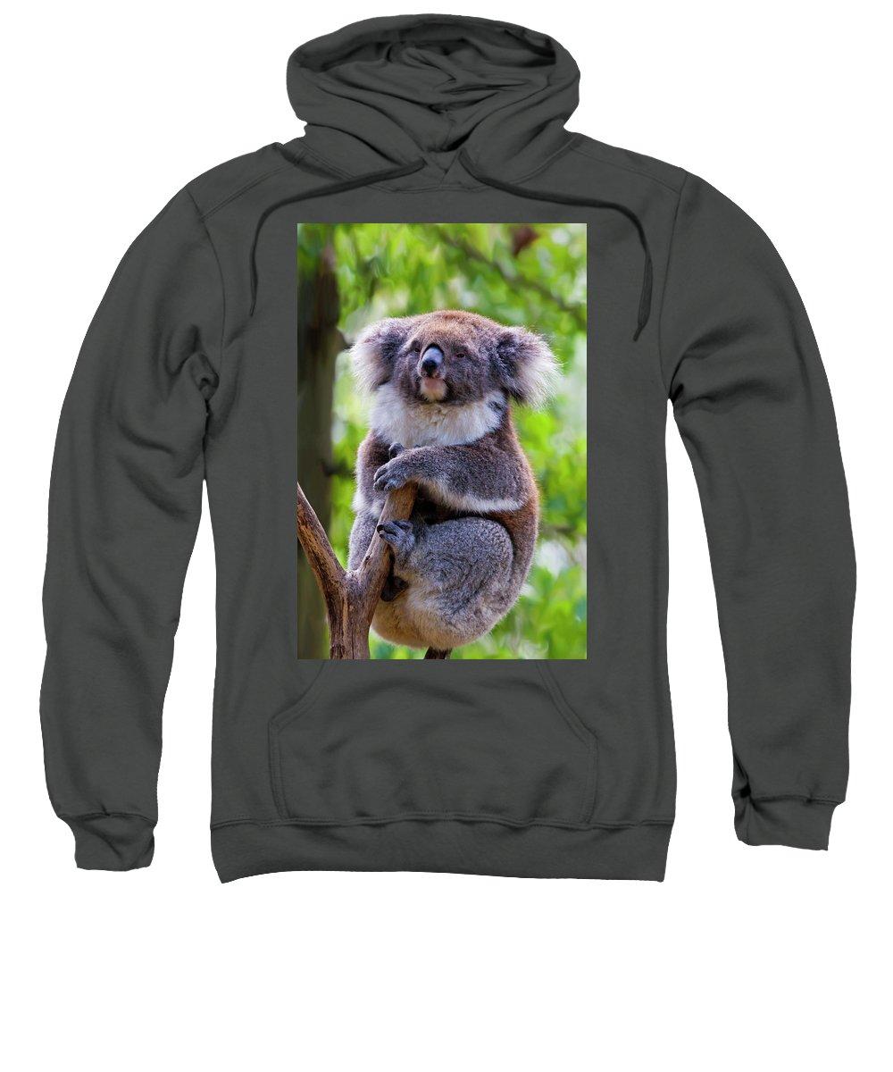 Koala Sweatshirt featuring the photograph Treetop Koala by Mike Dawson