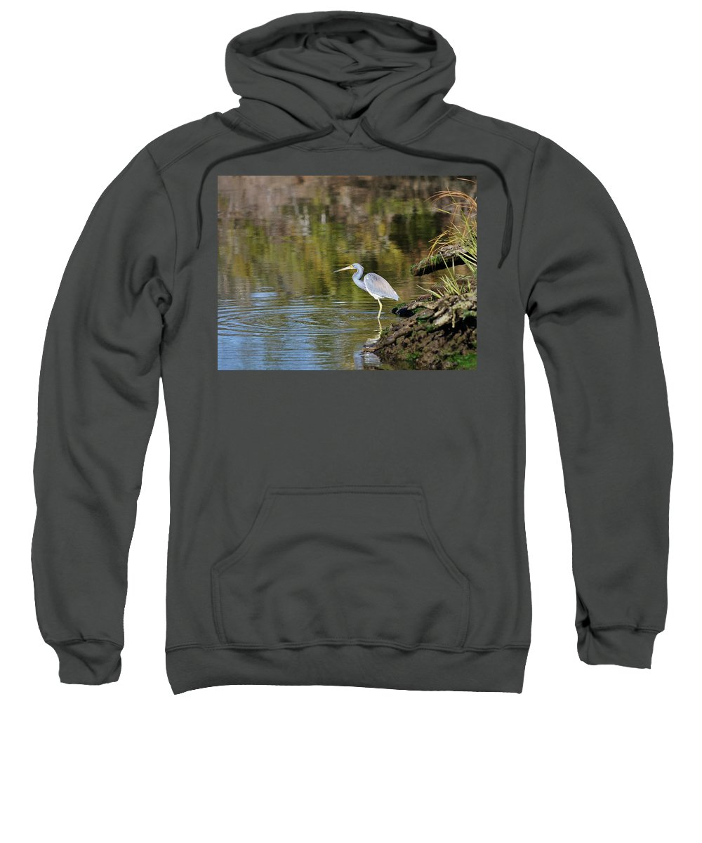 Tricolored Heron Sweatshirt featuring the photograph Tricolored Heron Fishing by Al Powell Photography USA