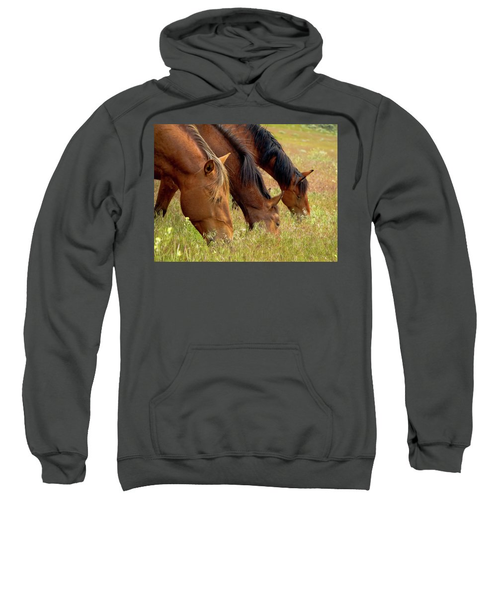 Horse Sweatshirt featuring the photograph Triple Mustang Treat by Waterdancer