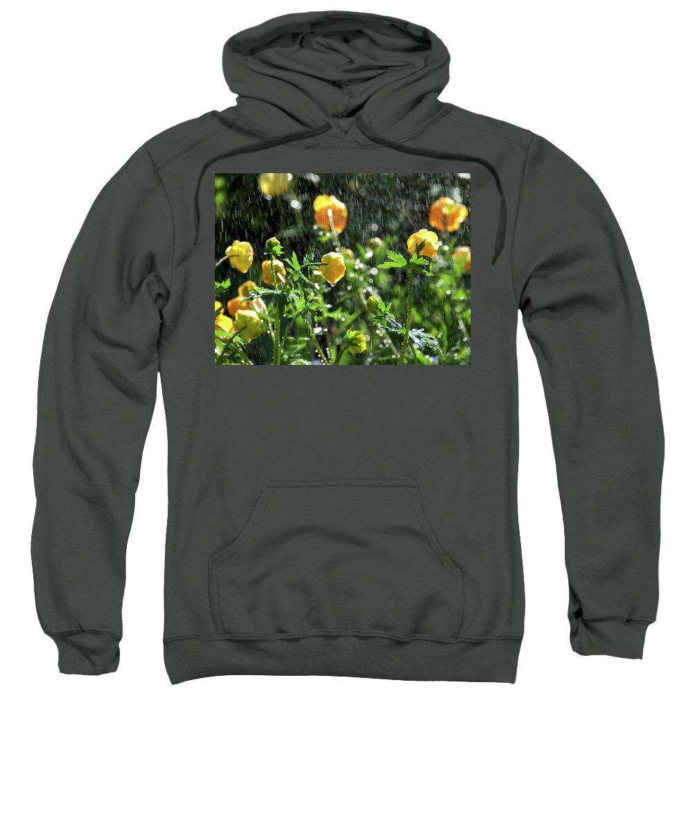 Trollius Europaeus Spring Flowers In The Rain By Tamara Sushko Sweatshirt featuring the photograph Trollius Europaeus Spring Flowers In The Rain by Tamara Sushko