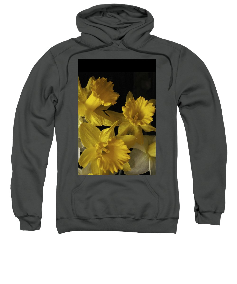 Macro Sweatshirt featuring the photograph Trumpet Daffodils by Nancy Griswold