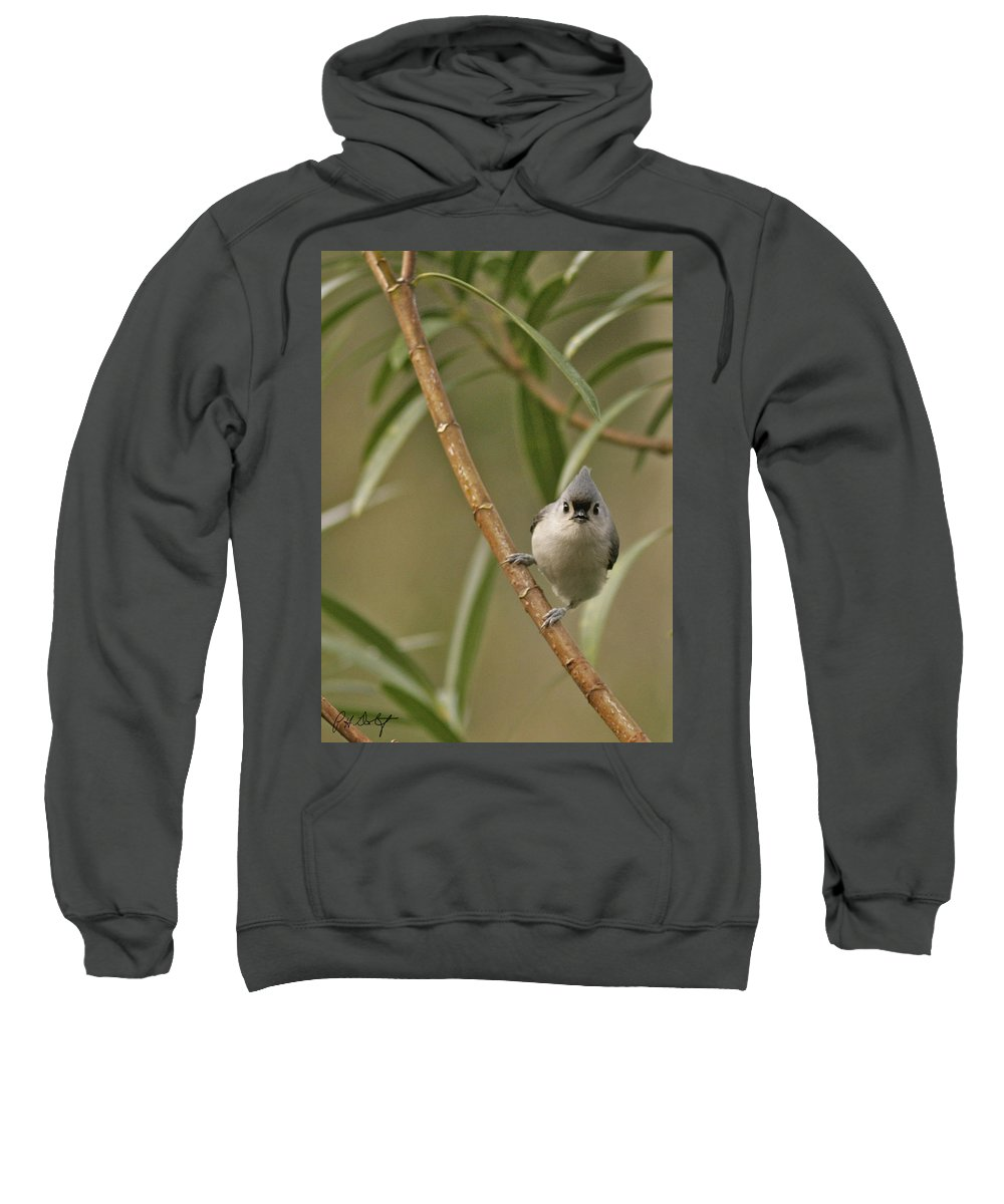Birds Sweatshirt featuring the photograph Tufted Titmouse by Phill Doherty