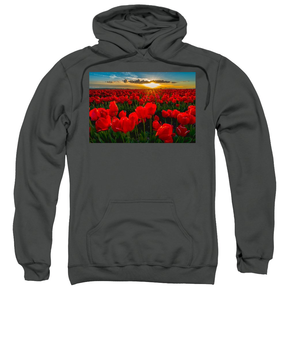Tulip Sweatshirt featuring the photograph Tulip In Sunset by Hisao Mogi
