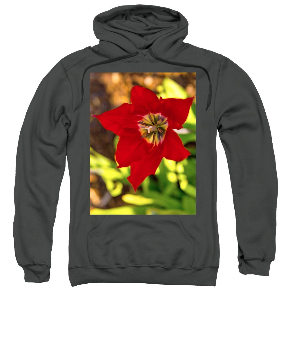 Tulip Sweatshirt featuring the photograph Tulip Star by Alex Art and Photo