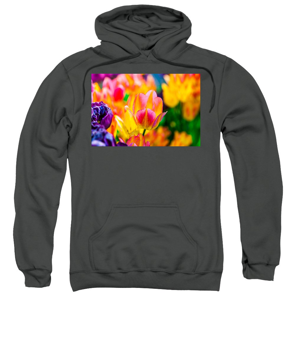 Tulip Sweatshirt featuring the photograph Tulips Enchanting 16 by Alexander Senin